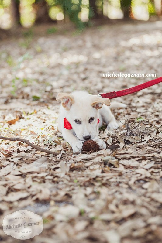 Lake Mary Puppy Photographer